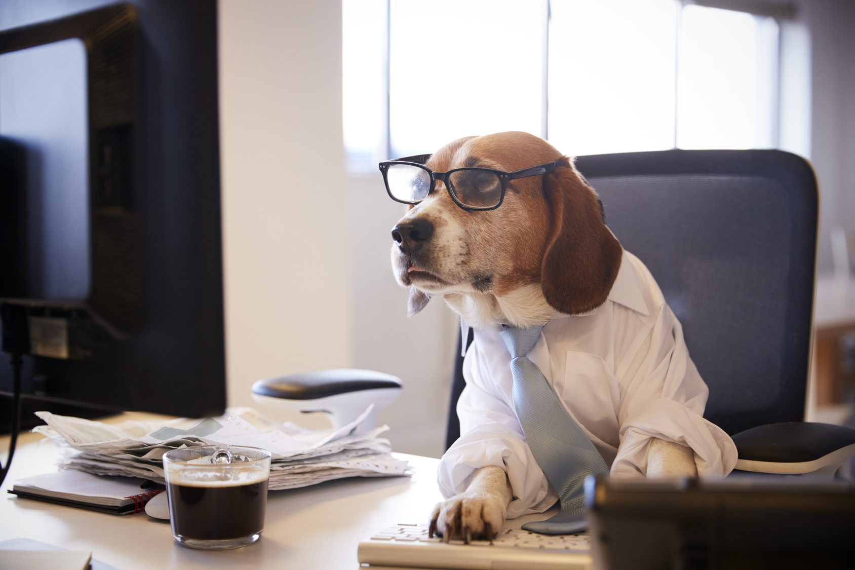 Beagle-Dressed-as-Businessman-Watching-Computer