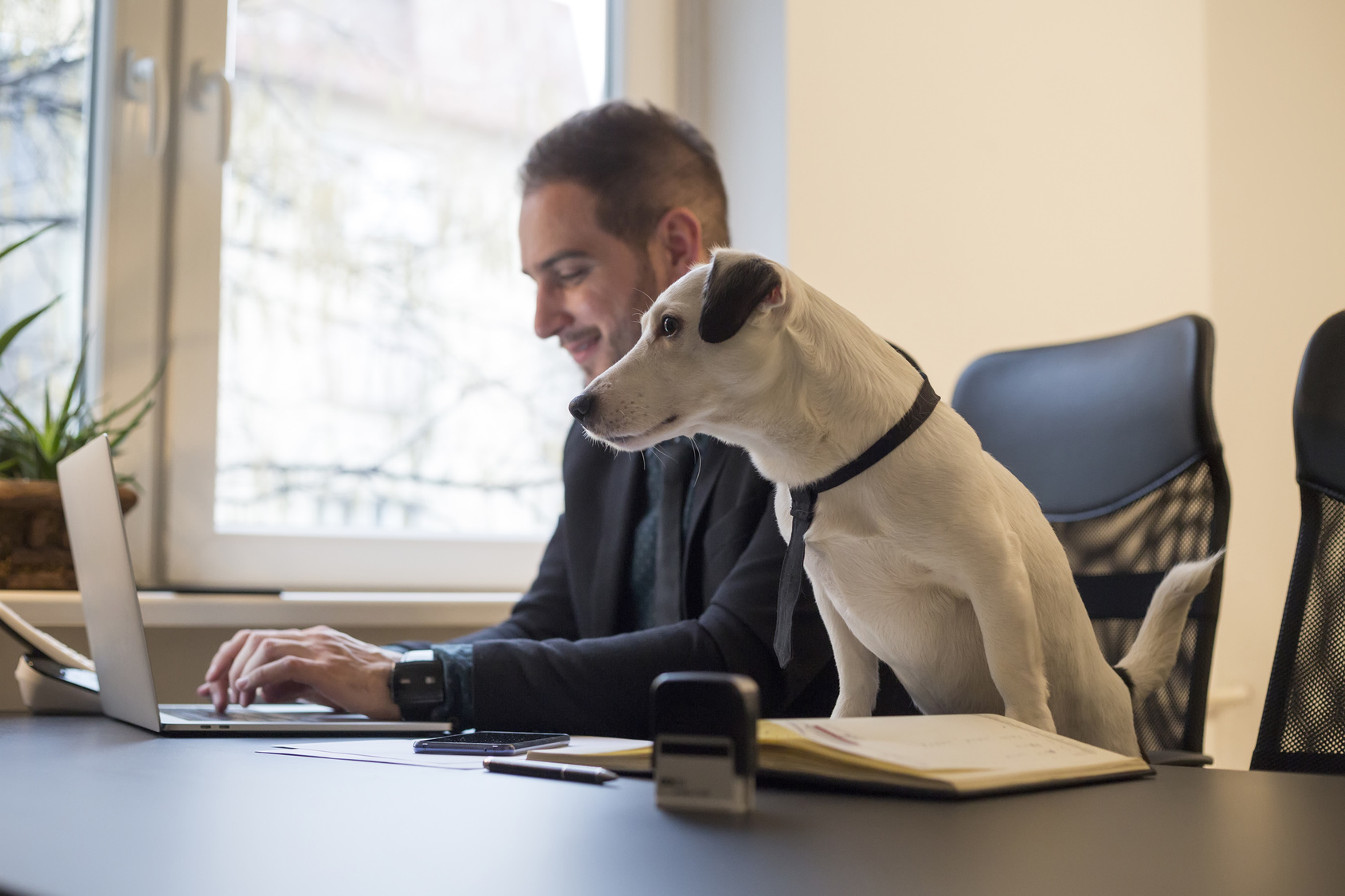 Dog-in-Office-with-Businessman